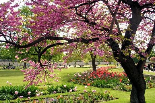 chansons-printemps-