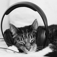 cat-with-headphones