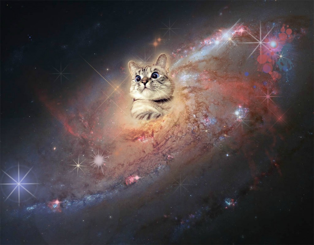 Nala_cat-In-Space-cats-37816614-3125-2440